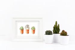 white cactus _hedgie