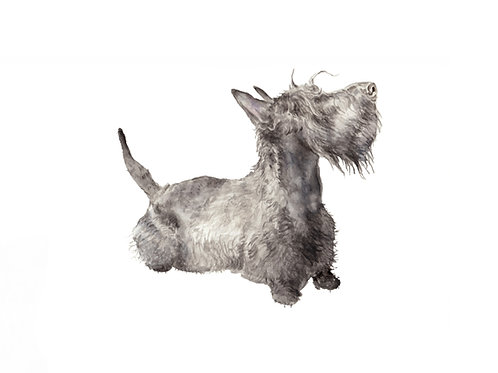 Scottie Limited Edition Print 8.5x11 Watercolor