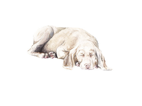 Weimeraner Dog - Limited Edition Print Watercolor