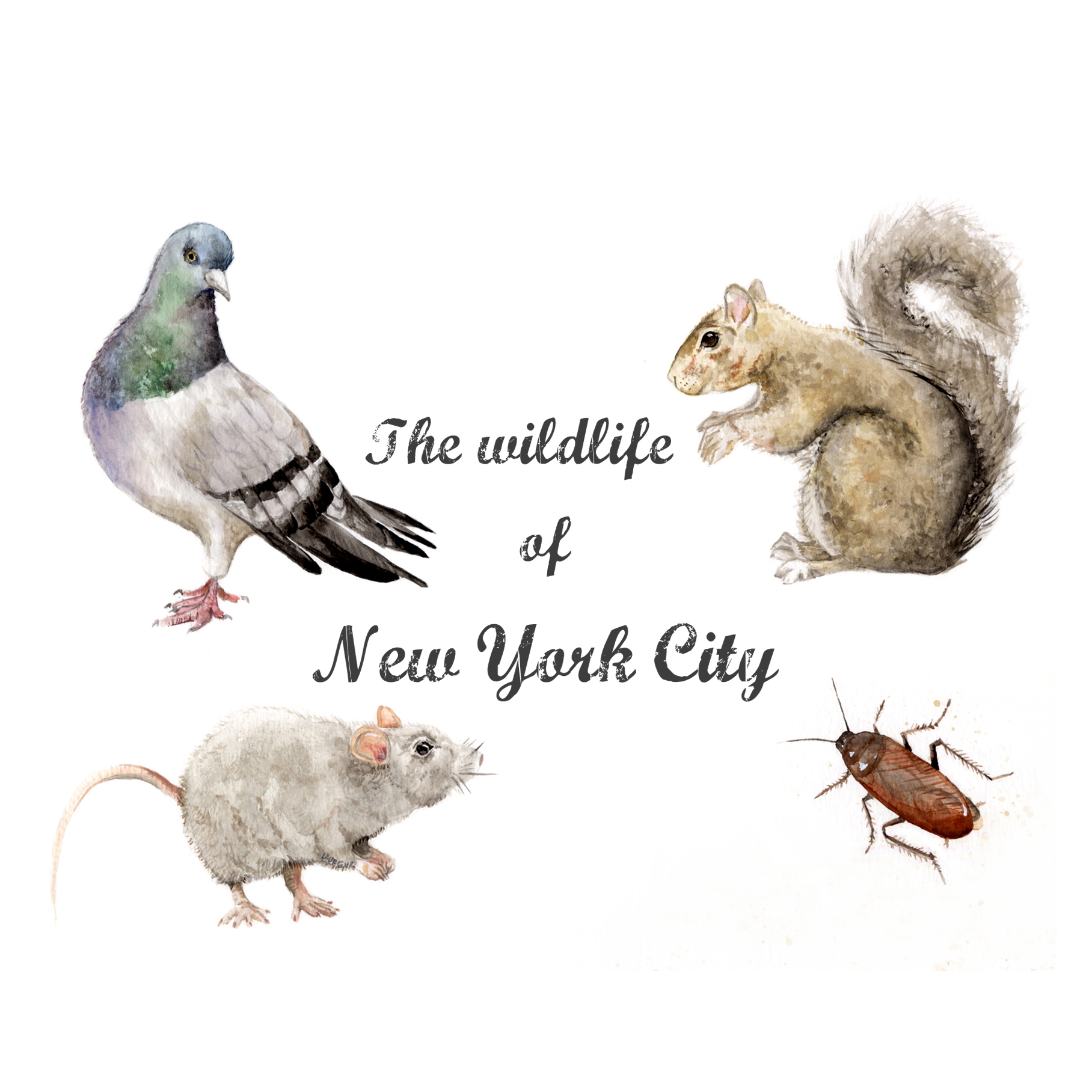 square wildlife.jpg