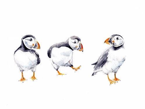 Puffins Limited Edition Print 8.5x11 Watercolor bird baby painting