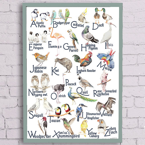 Birds ABC Alphabet Poster