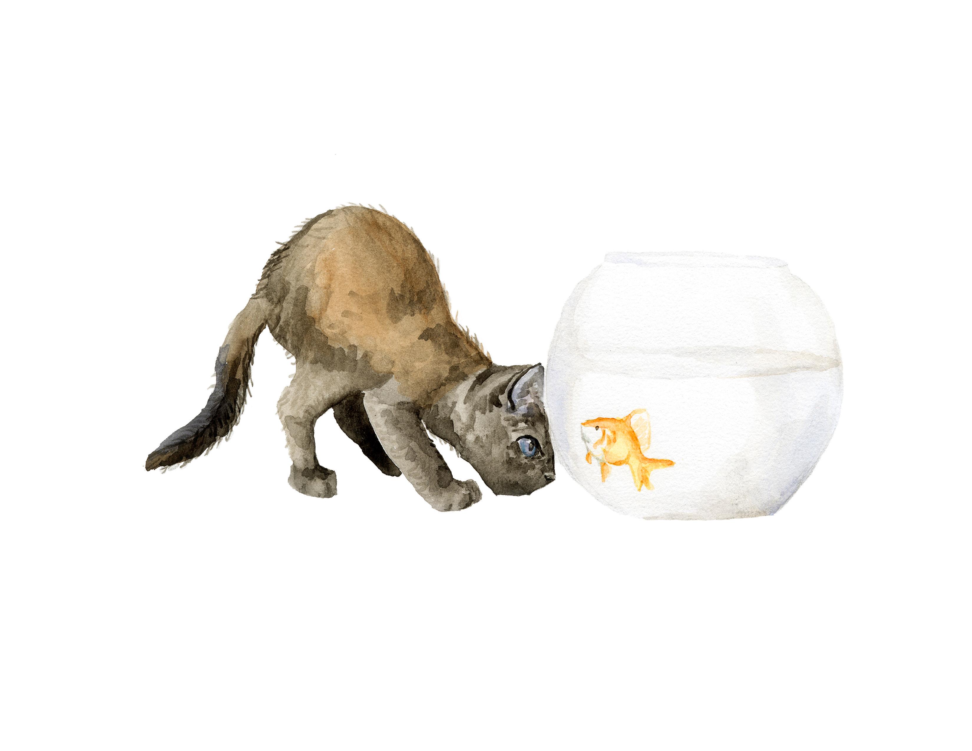 catfishbowl