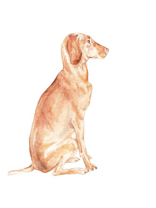 Viszla Dog - Limited Edition Print Watercolor