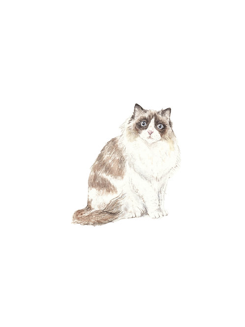 Ragdoll and Ragamuffin Cats Ltd Ed Watercolor Art Print -choose from 2 images!
