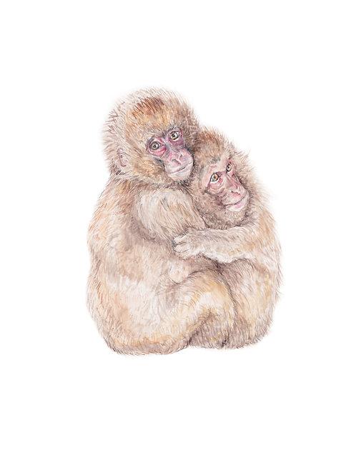 Cute Grooming / Hugging Monkeys Ltd Edition Print 8.5x11