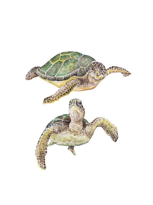 Sea Turtle Print 8.5x11 Watercolor