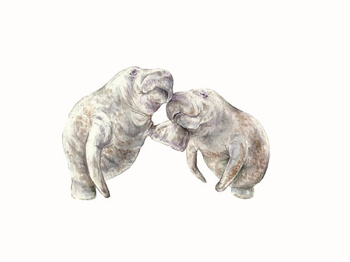 Manatees Limited Edition Print 8.5x11 Watercolor - Sea Cow, dugong, everglades