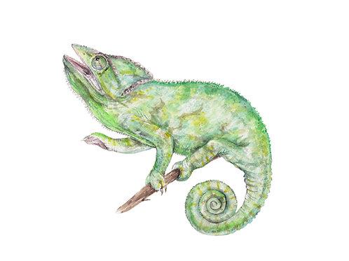 Chameleon Tropical Lizard Print 8.5x11 Watercolor