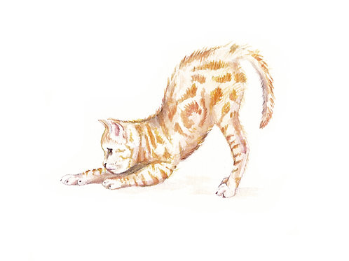 Ginger Stretching Tabby Cat Ltd. Edition Watercolor Art Print
