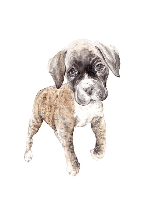 Boxer Dog Limited Edition Print Watercolor
