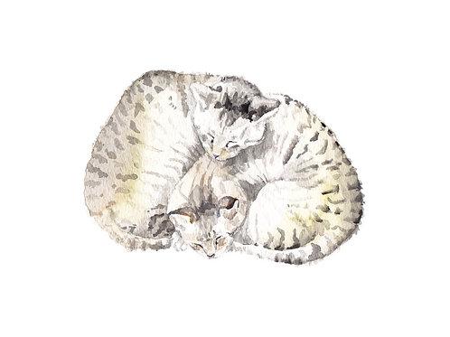 Cat Best Friends Curled up Tabbies Ltd Ed Print Watercolor
