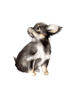 chihuahua8.5x11fixed.jpg