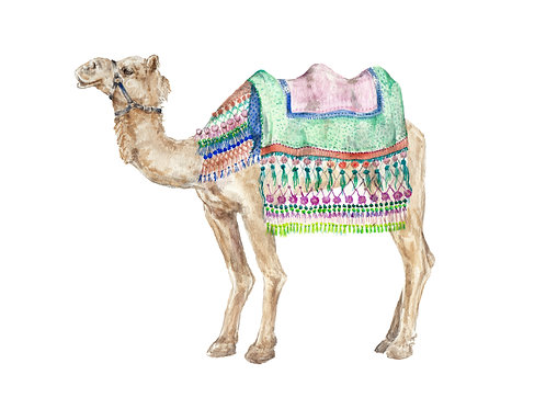 Colorful Camel India Morocco Limited Edition Print 8.5x11 Watercolor