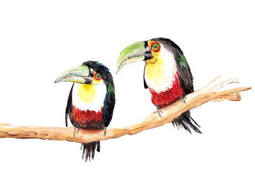 Two Toucans Limited Edition Print 8.5x11 Watercolor