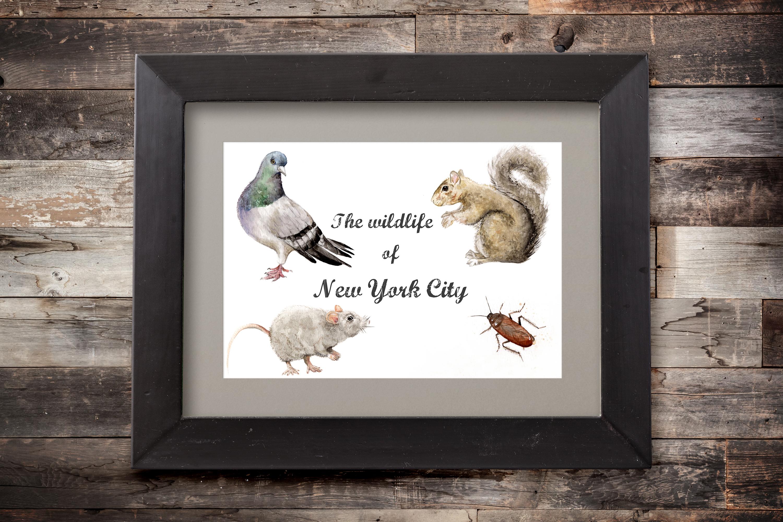 wildlife of nyc