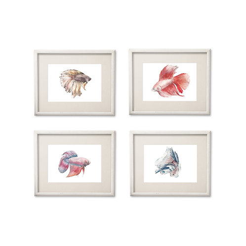 Betta Fish 8.5 x 11 Watercolor: You choose from 4 designs