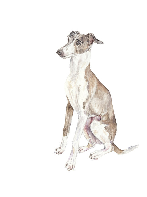 Italian Greyhounds Choose from 3 images Ltd Ed Print Watercolor