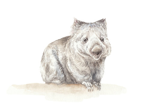 Wombat Watercolor Print 8.5x11 limited edition print