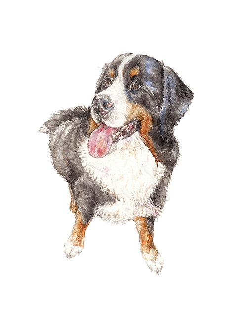 Bernese Mountain Dog Limited Edition Print Watercolor Choose From 2