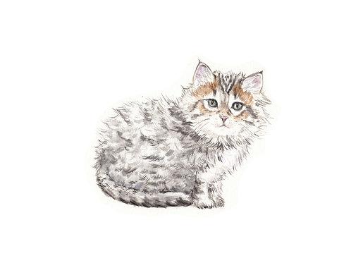 Siberian Kitten- Cat Looking Up Watercolor Art Print