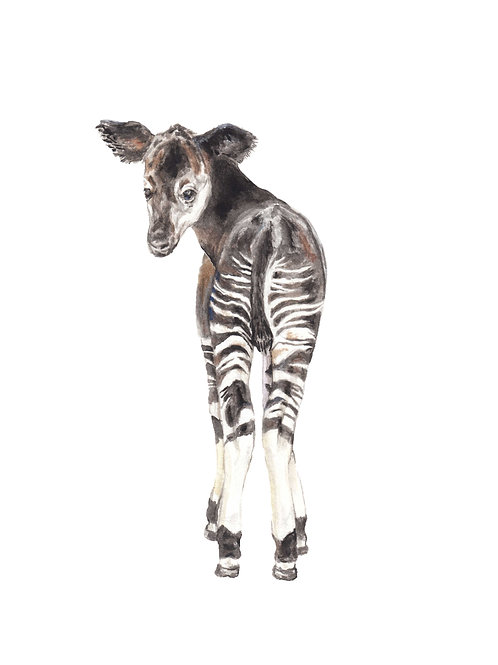 Okapi Limited Edition Print 8.5x11 Watercolor baby jungle animal