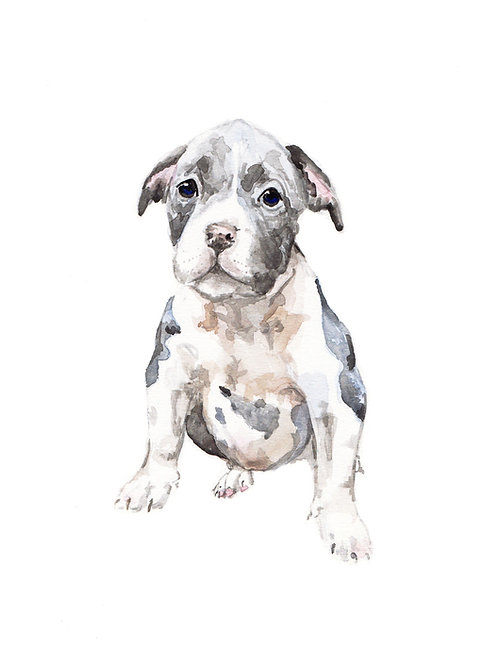 Spotted Pit Bull - choose from 2 images- Ltd Ed Print Watercolor