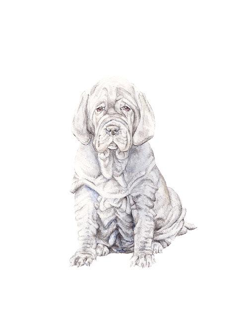 Neopolitan Mastiff Ltd Ed Print Watercolor