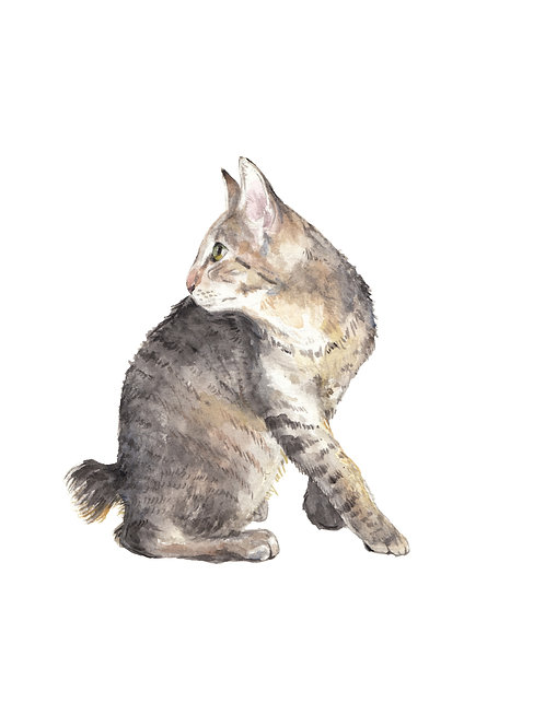 Manx Cat Looking Up Watercolor Art Print