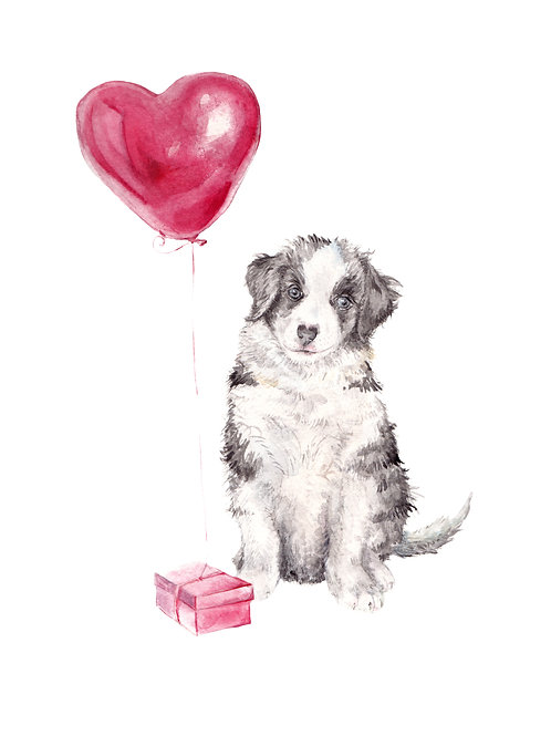 Aussie Shepherd with Balloon and Gift Ltd Edition Print Watercolor