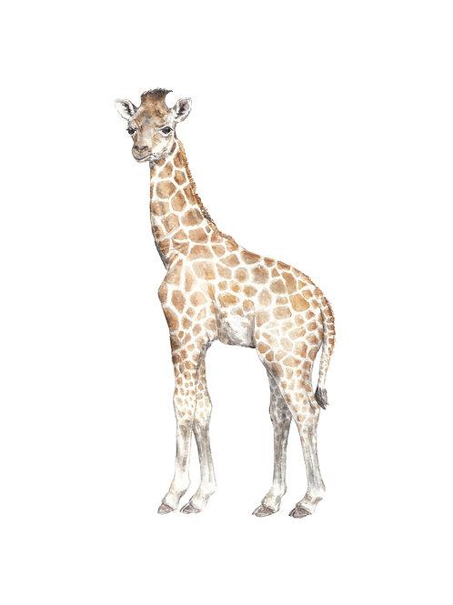 Giraffe Limited Edition Print 8.5x11 Watercolor Cute Safari Baby