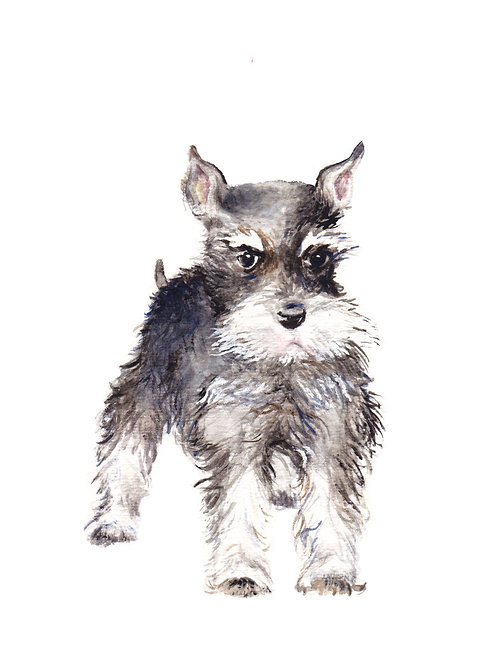 Schnauzer - choose from 2 images- Ltd Ed Print Watercolor