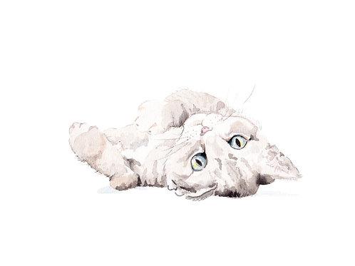 Gray Staring Cat Ltd Ed Print Watercolor