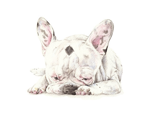 Black and White Frenchies Choose from 2 Images! Ltd Ed Print Watercolor