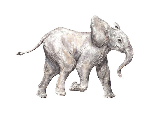 Baby Elephant Limited Edition Print 8.5x11 Watercolor Cute Baby Animal Painting