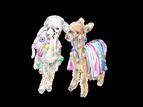 Colorful Baby Alpacas Llamas India Morocco Ltd Edition Print 8.5x11 Watercolor