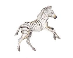 zebra2halfrear