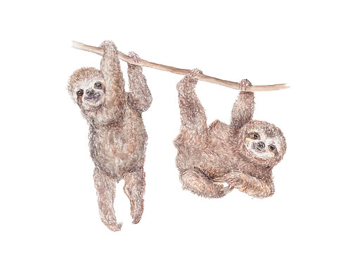 Sloth Limited Edition Print 8.5x11 Watercolor