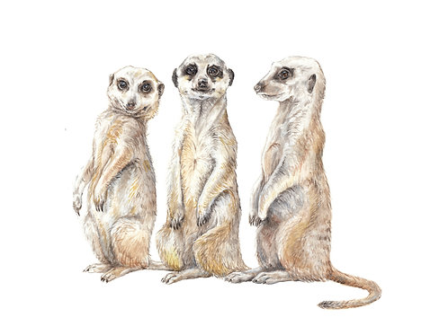 Meerkat Buddies Print 8.5x11 Watercolor Cute Safari Animal Painting