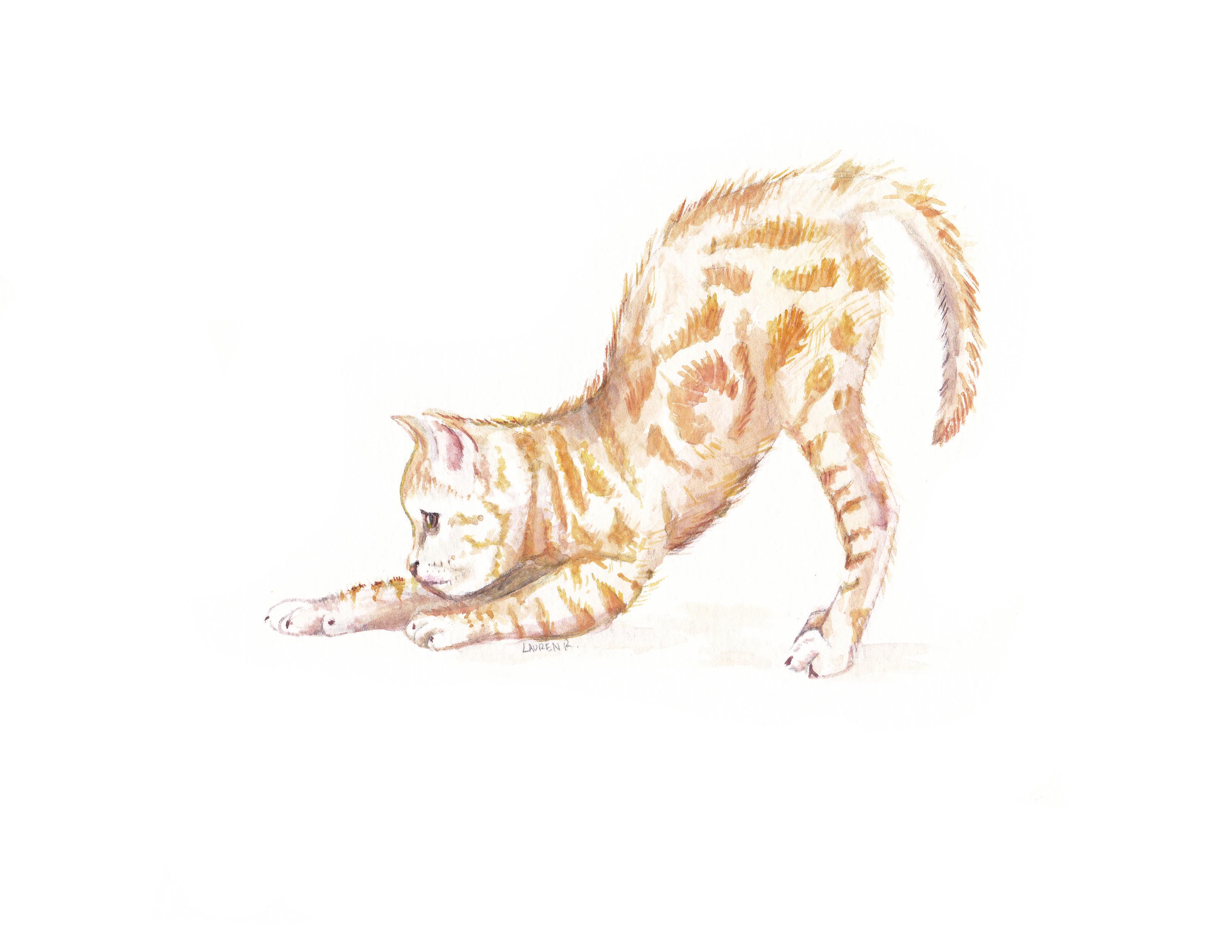 catstretch8.5x11.jpg