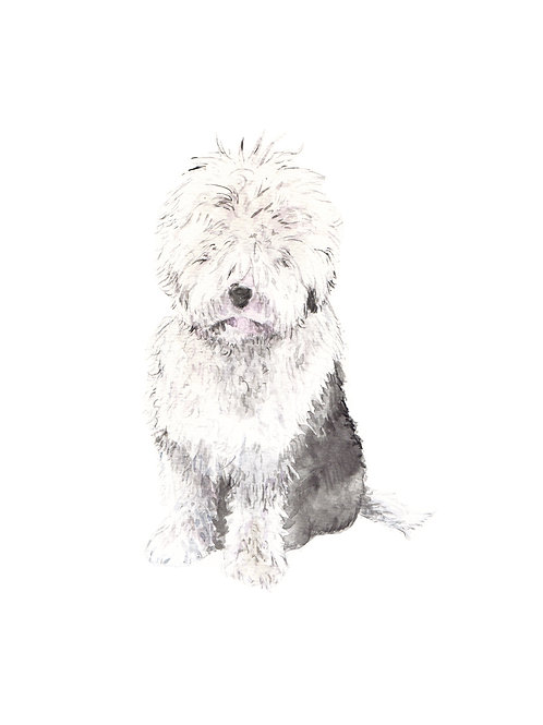 Old English Sheepdog Ltd Ed Print Watercolor