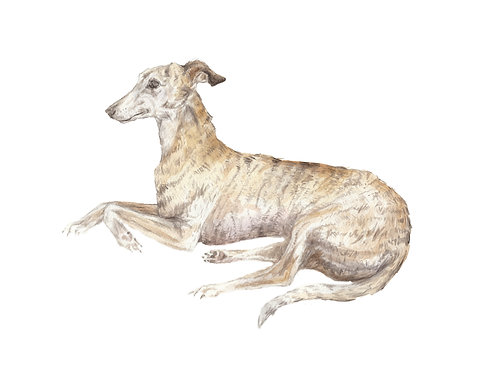 Greyhound Ltd Ed Print Watercolor