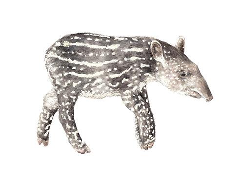 Tapir Limited Edition Print 8.5x11 Watercolor baby jungle animal
