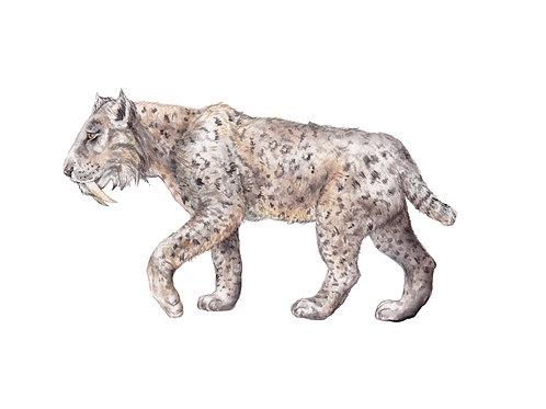 Saber Tooth Tiger Prehistoric Ltd Edition Print 8.5x11 Watercolor