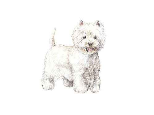 Westie Limited Edition Print 8.5x11 Watercolor