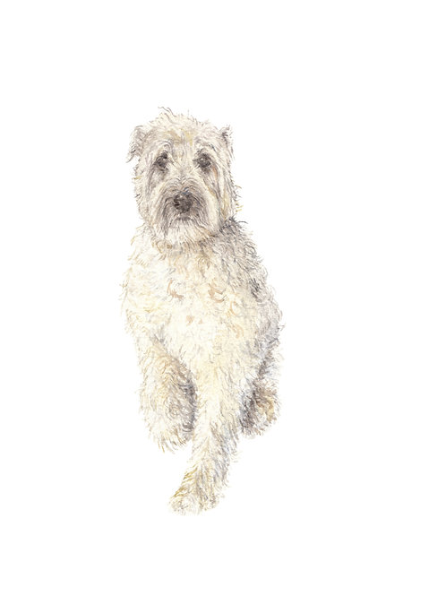 Wheaton Terrier Dog - Limited Edition Print Watercolor