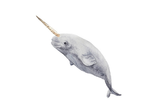Narwhal Baby Limited Edition Print 8.5x11 Watercolor - Mystical animal
