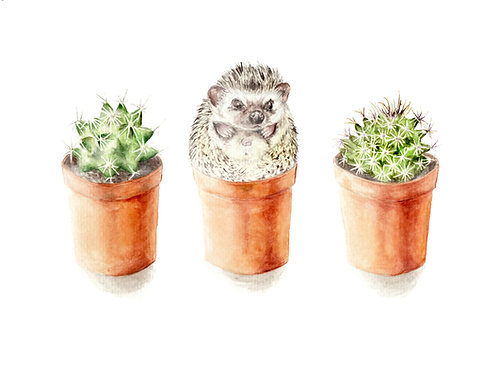 Hedgehog Cactus Limited Edition Print 8.5x11 Watercolor