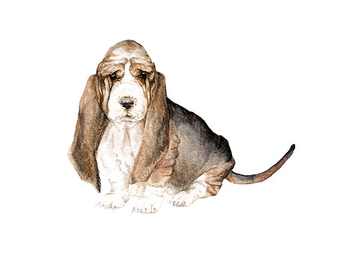 Basset Hound Dog Limited Edition Print Watercolor Choose From 2 images