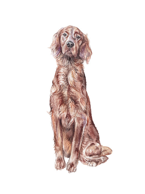 Irish Setter Dog Ltd Edition Print Watercolor Pup